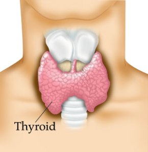 thyroid11